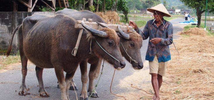 Bersafari ke Desa Wisata Kebonagung