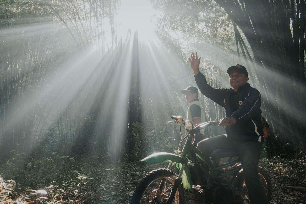 Hutan Bambu Andeman, Sanankerto